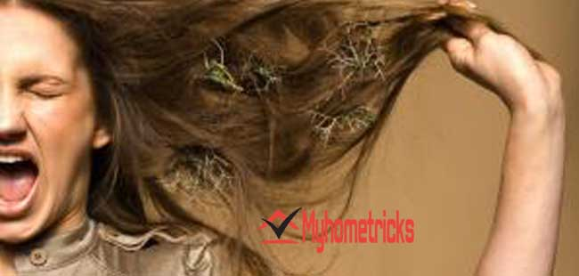 Reason of dry hair