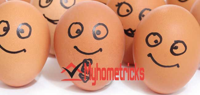 Best Egg Reviews – Tips About Eggs