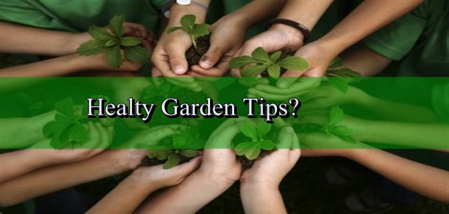 How to Control Garden Pests