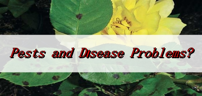 Pests & Disease Symptoms Controls