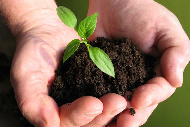 Using Fertilizers