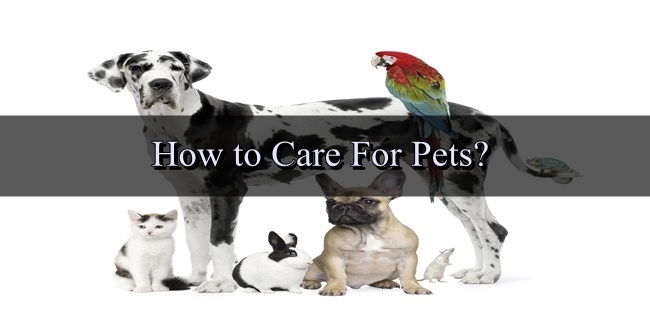 Pet Care – How to Care For Pets?