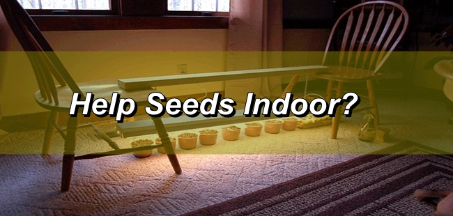 How Can I Sow Seeds Indoor?