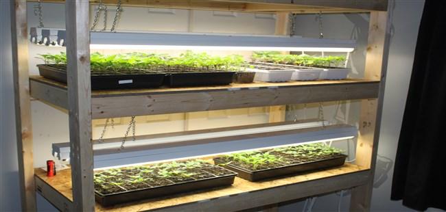 seedlings (650 x 310)
