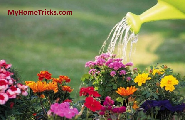 Watering Tips For Garden