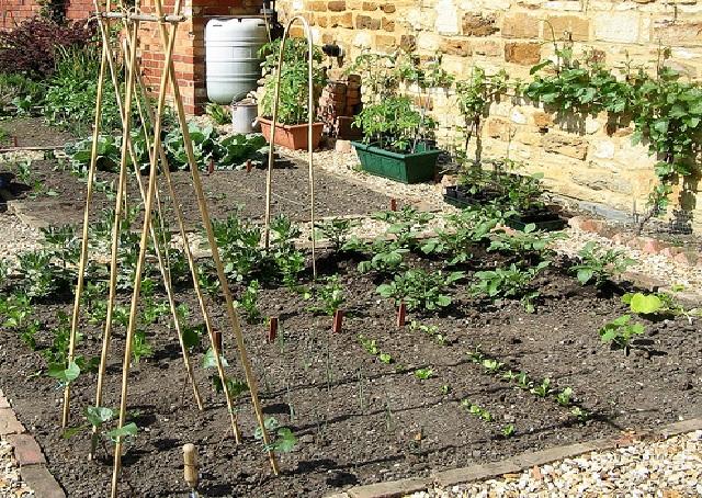 Start Gardening 1