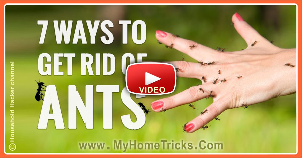 7 Genius Ways to Get Rid of ANTS (Video)