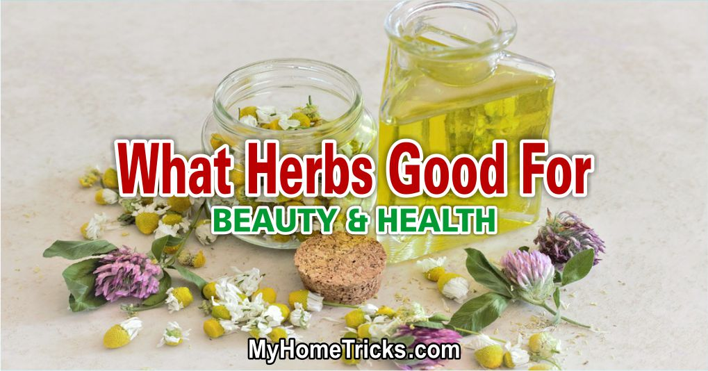 Herbs for Health and Beauty 1