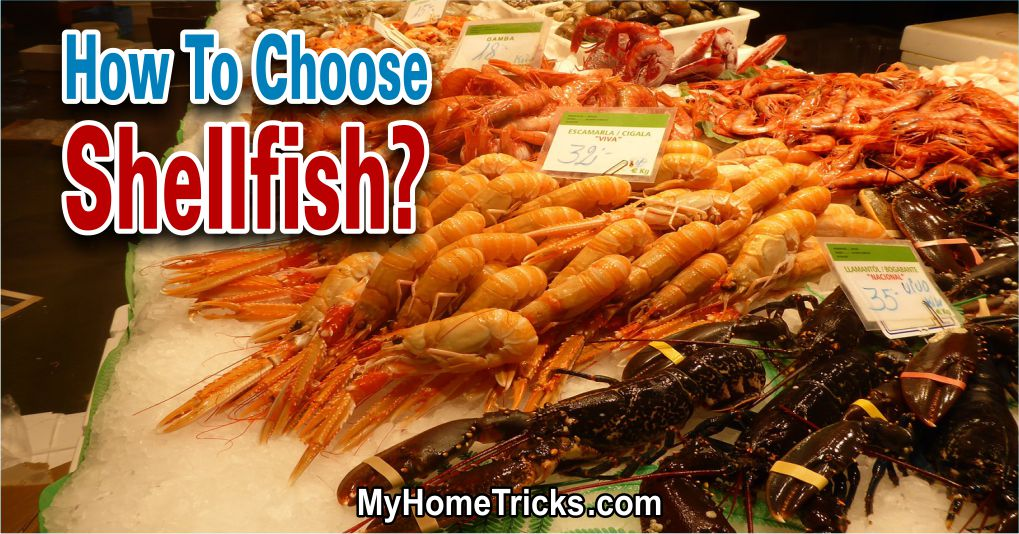 How To Choose Shellfish?