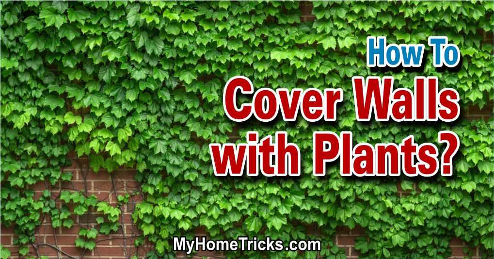green walls - how to cover walls with plants