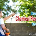 Chemical Pest Control to Plants