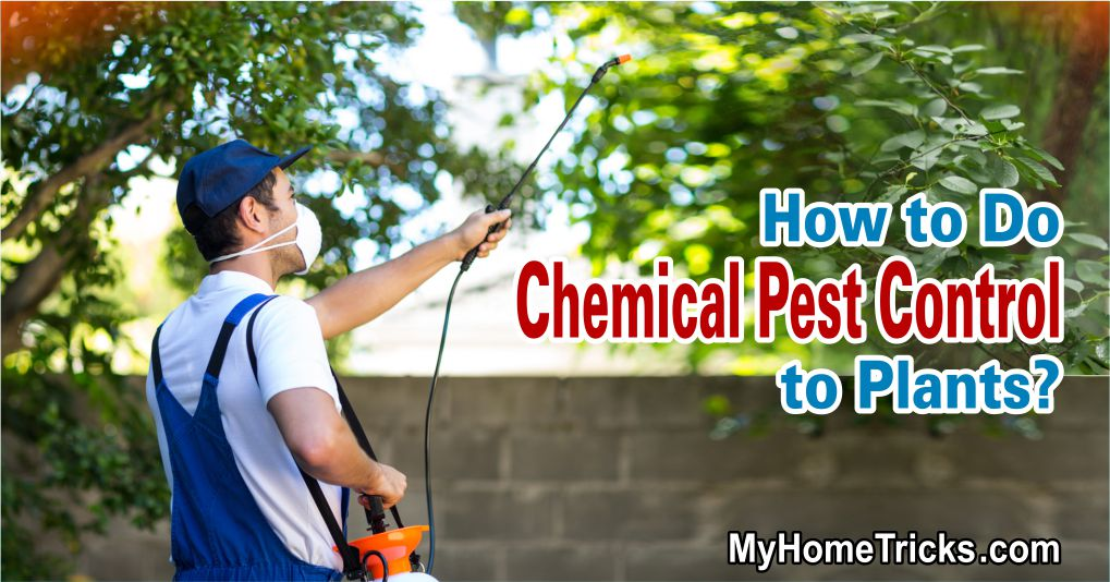 How to Do Chemical Pest Control to Plants?