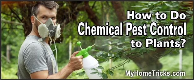 how to do chemical pest control to plants