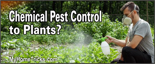 how to do chemical pest control