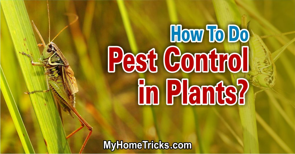 How To Do Pest Control in Plants?
