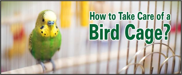 taking care of bird cage