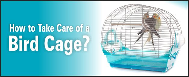 caring of a bird cage