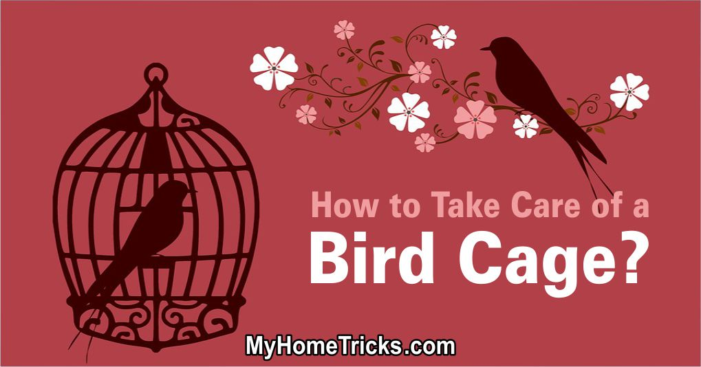 How to Take Care of a Bird Cage