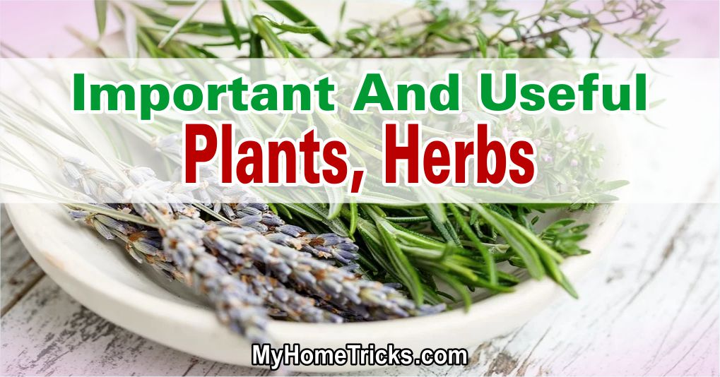 Important And Useful Plants, Herbs 1
